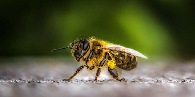 Gesunde Biene - gesunder Mensch BKK - VBU