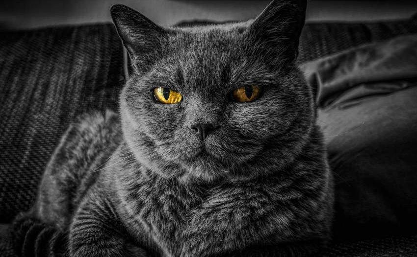 Warentest Trockenfutter für Katzen