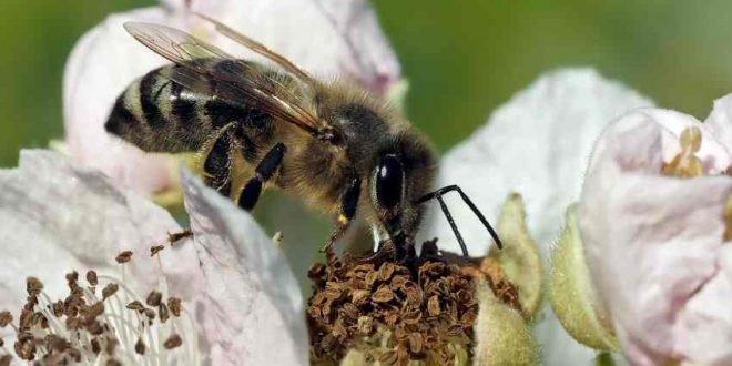 Achtung Allergie - Pollenschutz für Immobilien