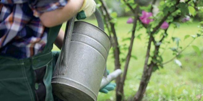 Beim Gießen im Garten beachten