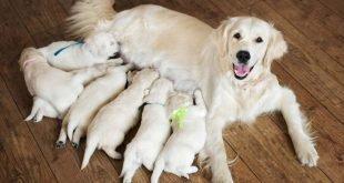 Hund und Katze Milben - Angriff auf die Haut