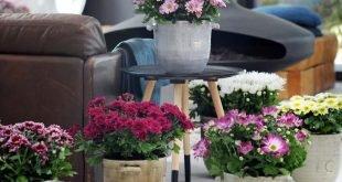 Mit Zimmerpflanzen Zuhause aufblühen lassen