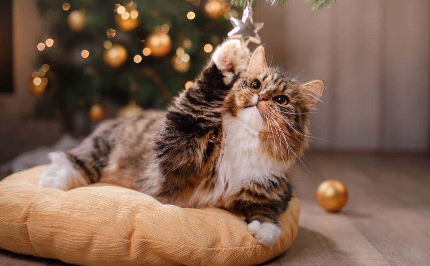 Hund und Katze - Stressfreie Weihnachten