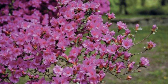 Herrliches Farbenspiel im Garten