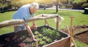Pflegeleicht und trotzdem schön-Garten