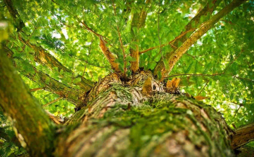 Die beste Zeit Bäume zu pflanzen, war vor 20 Jahren