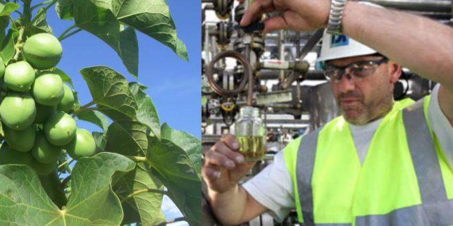 CO2 - Jatropha Klima Farming von Migraplan