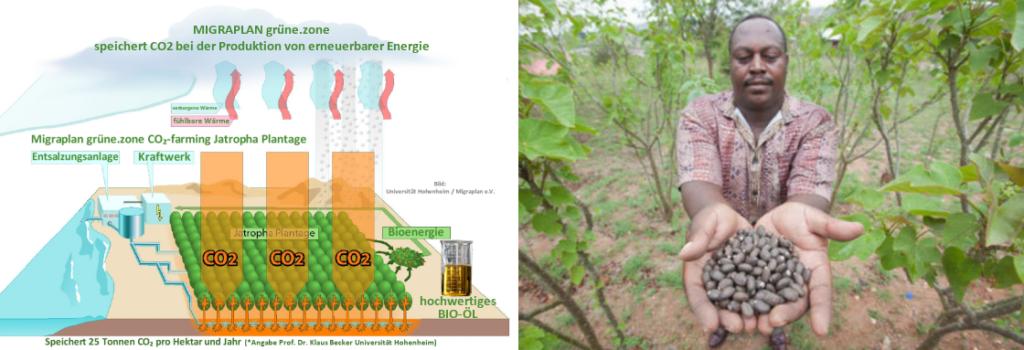 Jatropha CO2 BioOel Plantage