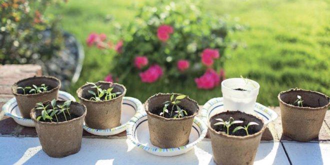 Den Frühling genießen Tipps für den Garten