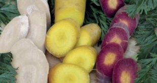 Farbenfroher Möhrenmix im Saatband