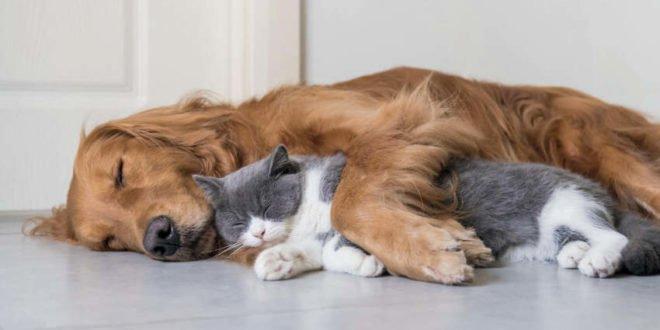 Hautpflege für Hund und Katze – wann und wie