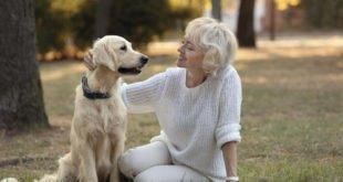 Hunde im Alter: Zusatzkosten beim Arzt absichern