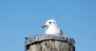 Ostfrieslands Nordseeküste lockt