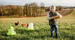 Hobbyfarming - Hühnerhaltung leicht gemacht