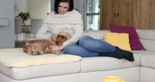 Hund und Katze - Auch im Alter fit und mobil