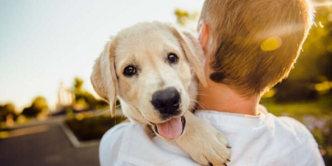 Hund, Katze & Co. - Haustierboom im Coronajahr