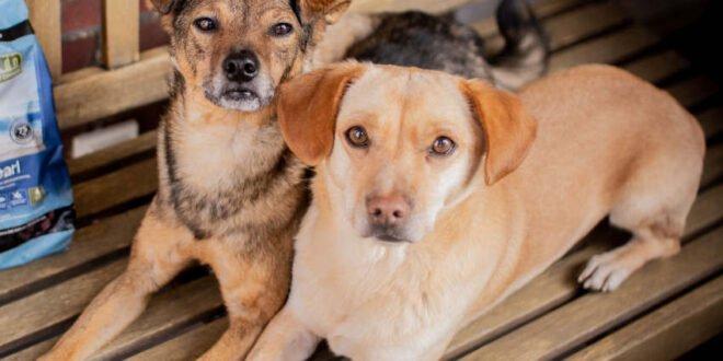 Hundefutter - Trockenfutter, Nassfutter - oder soft