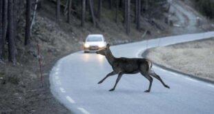 Kfz-Versicherung - Wildunfälle haben Hochkonjunktur
