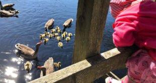 Nordseeinsel Amrum - Natur ungestört genießen