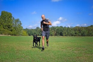 Outdoor-Aktivitäten - Draußen spielt das Hundeleben