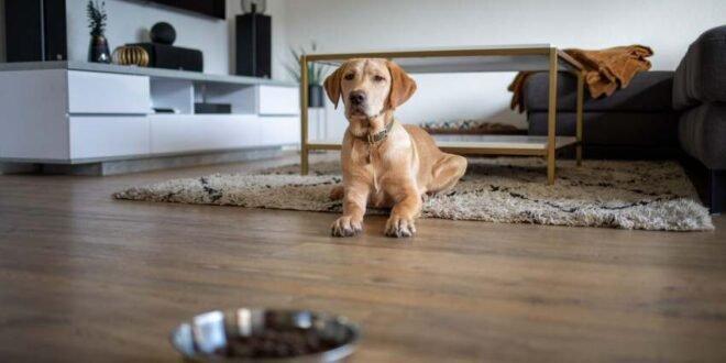 Hundewelpen-Natürlich füttern von Anfang an