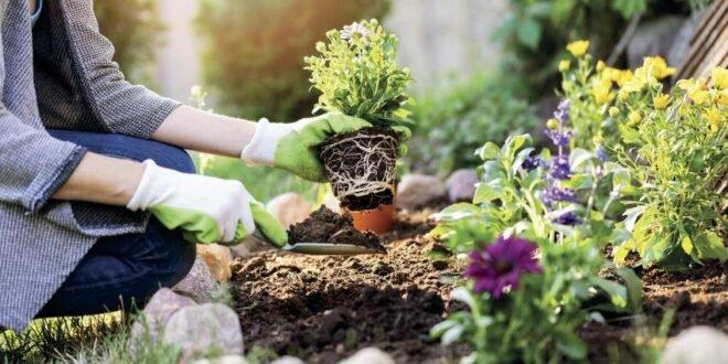 Weniger ist mehr - Nachhaltiges Gärtnern