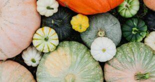 Supermarkt - Herbstsaison ist Gemüsesaison